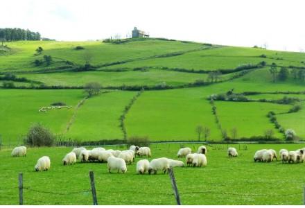 Online Kaufen Idiazabal Käse und Milchprodukte aus dem Baskenland