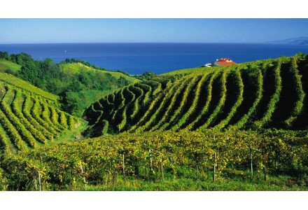 Buy Online Wine, Cider, Beer and Spirits of the Basque Country