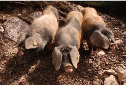 Online Kaufen Wurstwaren und Pateten das Baskenland und Navarra